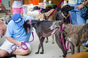 Meet and greet greyhounds